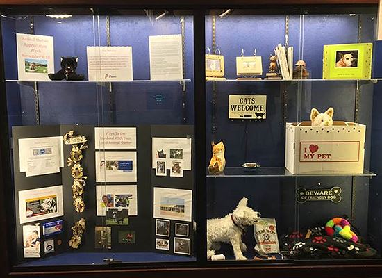 Display Case Animal Shelter Week