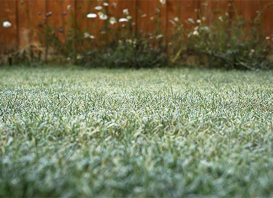 Icy lawn